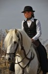 Présentation de chevaux